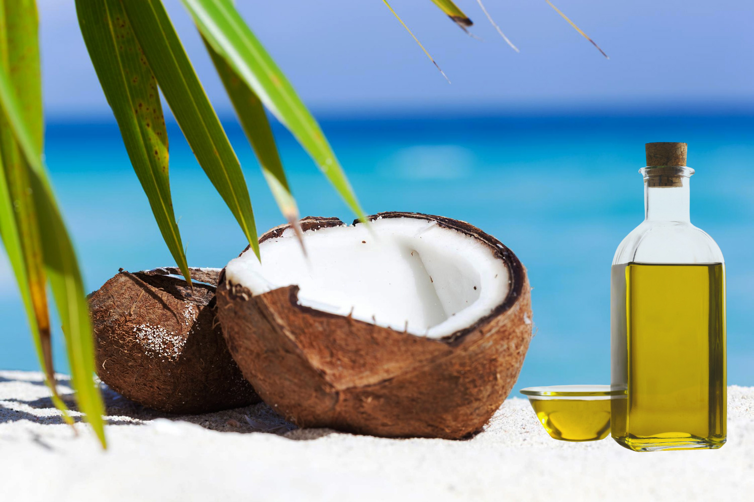 The Tropical and Nutritive Coconut